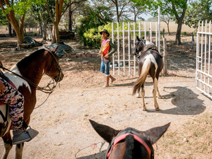 A cow boy seen working with horses. Colombian cowboys taking care of the cows in the region of Casanare, eastern Colombia, between the Andes, the Orinoco River and the border with Venezuela. These are Plains and pastures with wide rivers and marshes, a region of big biodiversity. But nowadays, it is in danger because of climate change.
