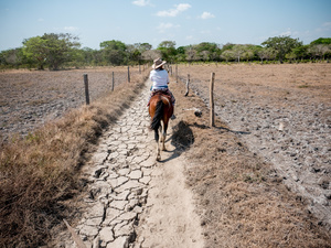 Cowboy seen riding through an area affected by Drought. Colombian cowboys taking care of the cows in the region of Casanare, eastern Colombia, between the Andes, the Orinoco River and the border with Venezuela. These are Plains and pastures with wide rivers and marshes, a region of big biodiversity. But nowadays, it is in danger because of climate change.