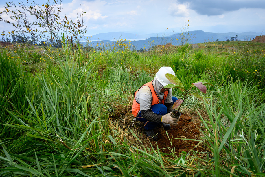 Worker seen doing rehabilitation work planting tree seedlings at a former nickel mining site. Nickel mining by the PT Vale Indonesia, a nickel plant in Soroako, South Sulawesi, Indonesia. A number of economists and observers predict an increase in demand for nickel in future, one of the reasons is the era of electric vehicles where nickel is a raw material for its batteries.