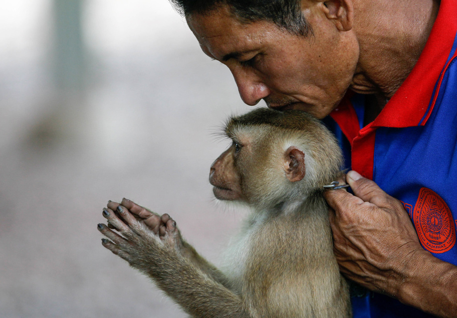 Niran Wongvanit poses with his monkey after training it to collect coconuts for agriculture in a training session at the monkey school in Surat Thani, south of Bangkok.
