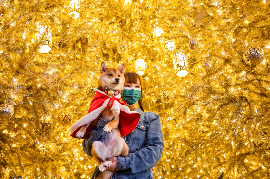 A woman wearing a face mask poses for a photo with her dog in front of a golden Christmas tree at a shopping mall in Hong Kong.