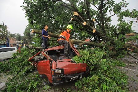 Officers seen cutting down fallen trees due to small tornadoes. Heavy rains accompanied by small tornadoes struck the Batutulis area in the South of Bogor where 1 person was found died in the disaster.