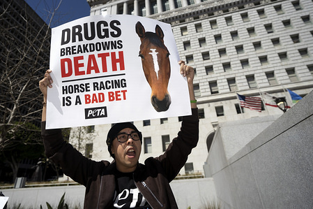 A demonstrator seen shouting slogans while holding a placard that says drugs breakdown death, horse racing is a bad bet during the protest. Animal right activists held a PETA protest against the death of 22 horses at the Santa Anita Racetrack. The protesters holding placards also called on the Los Angeles District Attorney to open a criminal investigation and suspend racing while investigating the cause of the death.