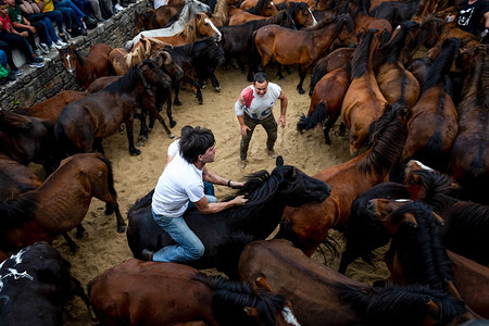 An aloitador struggles with a wild horse at the curro (arena) during the Rapa Das Bestas (Shearing of the Beasts) traditional event in the Spanish northwestern village of Sabucedo, some 40 kms from Santiago de Compostela. The Rapa of Beasts, translated as animal Shearing, takes place on the first weekend of July for four days in Sebucedo, Spain. Hundreds of wild horses have been rounded up and wrestled to the ground for a hair-cut as part the tradition.