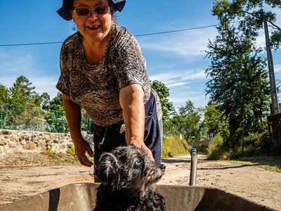 A Portuguese woman seen with her dog on a wheelbarrow, after working in a field. The Camino de Santiago (the Way of St. James) is a large network of ancient pilgrim routes stretching across Europe and coming together at the tomb of St. James (Santiago in Spanish) in Santiago de Compostela in north-west Spain. The Portuguese Way is the second most popular Camino in terms of numbers of pilgrims. From Lisbon to Santiago there are around 610 kilometers approx. A way that allows you as a pilgrim to see rural Portugal, full of green fields, rural villages, and little towns, where you can have a nice talk with local people.