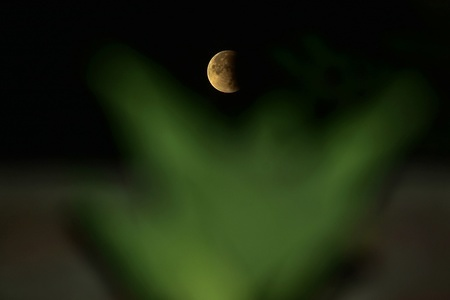 The moon can be seen during a partial lunar eclipse in Srinagar. Skywatchers around the world have witnessed a partial lunar eclipse, 50 years to the day since the US mission to put men on the Moon lifted off. The eclipse began from 1:31 am on July 17. The maximum eclipse occurred at 3 am and the partial eclipse ended at 4:29 am in India. This was the last lunar eclipse of the year 2019.