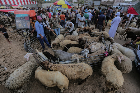Palestinians gather in a market to sell sheep at the Bureij refugee camp.