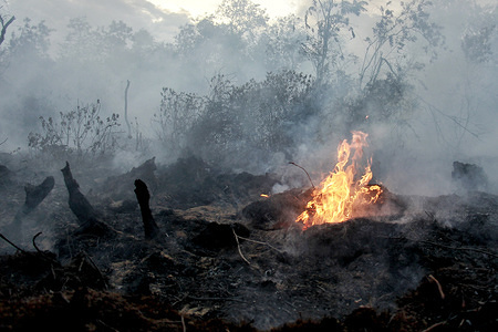 View of the burnt down forest in Meulaboh. Forest and land fires in West Aceh Regency spread over seven sub-districts burning around 121.8 hectares. However, this was stated to be reduced based on data from the Aceh Regional Disaster Management Agency (BPBD-Aceh). The cause and causalities of the fire are still uncertain.