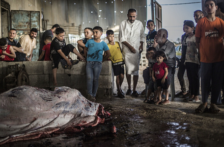 (EDITOR'S NOTE: Image contains graphic content.) Palestinians watch butchers slaughter cows, during the Holy Day. Eid al-Adha celebration, indicates the willingness of Prophet Ibrahim (Abraham for Christians and Jews) to sacrifice his son. During the holiday, that lasts for almost four days, Muslims slaughter sheep or cattle and distribute part of the meat to the poor and eat the rest.