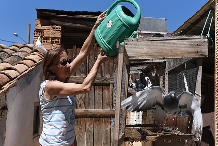 A woman sprays water with a watering can to her pigeons in Almazán, north of Spain, where high temperatures reached 36º degrees Celsius at the afternoon hours. Spanish's weather agency AEMET said that twenty five provinces in south of the country are with a red alert on Saturday with temperatures reaching up to 40 Celsius degrees during the day.