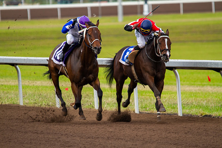 Number 3, Moon King and umber 8, Private Money in action during the Final stretch of the 9th race of the Canadian Derby. The 90th racing of the Canadian Derby, a $250,000 stakes race moves to its new home at The Century Mile Racetrack and Casino.  The 1 1/4 mile race is one of the longest running races in Canada.
