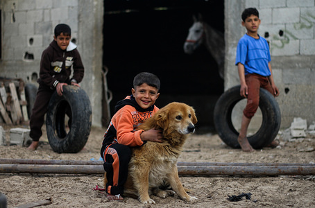 Palestinian boy plays with a dog at a family home in the northern Gaza Strip.