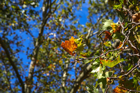 Leaves are seen changing colours as autumn starts in London.