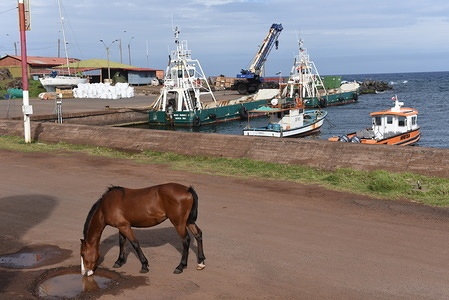 A horse is seen drinking water at the small village of Hanga Roa. The population of wild horses on Easter Island, also known as Rapa Nui, a Chilean island in the south eastern Pacific Ocean, is about 6,000 specimens. It even outnumbers native inhabitants. They roam free around the island.