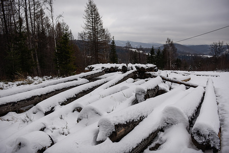 Logs of wood covered with snow at Beskid Maly mountains after snowfall in Porabka.