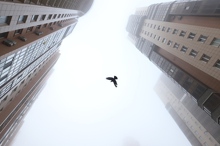 A pigeon flying in the courtyard during heavy fog.