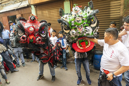 Chinese community members perform lion dance on street during the celebration of Chinese new year in kolkata. Chinese New Year is the most important and popular festival in Chinese culture. According to Lunar calendar 25th January is celebrated as Chinese New year instead of 1st January. On this day they perform Dragon dance, Lion dance etc as it is believed to bring good luck for the New Year.  The Chinese population in Kolkata is mainly concentrated in two regions one Terrify market and another Tangra. Each and every year they make many colourful processions on street to celebrate Chinese New Year.