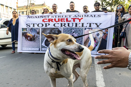 A street dog seen during the demonstration. Animal lovers and NGO's from different districts of West Bengal organised a protest against the street animal cruelty in Kolkata.
