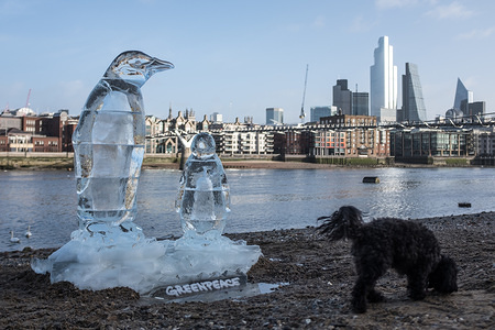 Penguin ice sculptures appeared on the shore of the Thames in London.  This is part of a Greenpeace campaign for global awareness to protect the oceans and marine life.