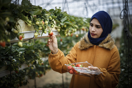 Palestinian nurse, Haneen Abu Daqqa works in a strawberry field after service at the hospital, seeks to increase her income amid deteriorating economic conditions, stands in the southern Gaza Strip.