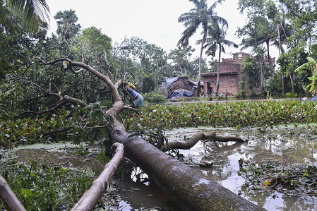 View of a fallen tree after the Cyclone Amphan attack. The cyclone has killed at least 12 people and ravaged Hoogly and several parts of West Bengal. It has destroyed thousands of homes and swamped low-lying areas of the state.