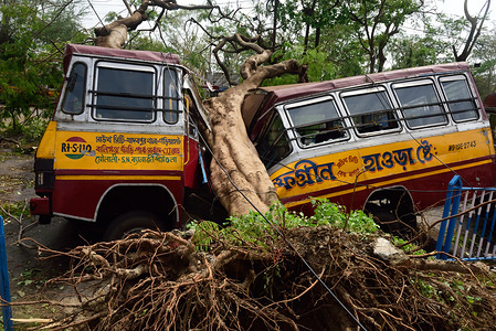 A damaged bus by an uprooted tree during the aftermath. Cyclone Amphan hit west Bengal with a speed of 150 Km/ hr leaving 19 people dead with more than 1000 trees uprooted along with electric poles, traffic signs and many vehicles damaged. Electricity and mobile networks were cut off but restored after 72 hours in some areas.