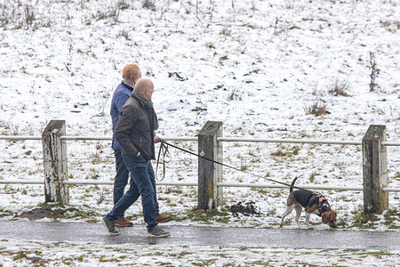 A couple walks their dog along a snowy road.Daily life after light snowfall and cold winter conditions.