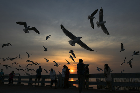 Tourists watch brown-headed seagulls at a seaside recreation area in Bang Pu, central Samut Prakan Province. The birds migrate from Russia and Mongolia to this resort town every year beginning in November - April.