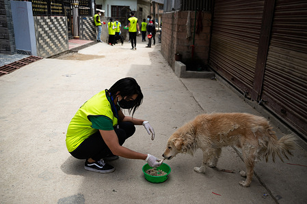 A Nepalese Youth Volunteer representing  'Animal welfare Nepal' feeds a stray dog during the 11th day of the Prohibitory order due to a Second wave of the Coronavirus disease (COVID-19) in Kathmandu. Along with hitting people's lives harder, the ongoing nationwide lockdown imposed by the government to curb the spread of COVID-19 has made it difficult for street dogs to survive. As the street dogs used to depend on food given by locals, prohibition on people to step out of their houses has led the street dogs to starve to death.