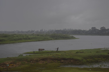 A man with his cow seen going towards his home in rain before the landfall of  'Yaas' cyclone in west Bengal. Cyclone 'Yaas' will probably make landfall amid Balasore and Digha Coastal areas on May 26, Wednesday Morning. As a very severe cyclonic storm, it may cause heavy rainfall in coastal districts of West Bengal and north Odisha.