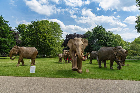 The herd of Coexistence Lantana Elephants in St James's Park. Coexistence in Green Park and St James's Park is an environmental art exhibition featuring 100 life size lantana elephants which aims to shed light on humans' increasing encroachment on wild places.
