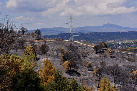 View of burned down area in the Vall Deina neighbourhood during the aftermath. Sparked by a neighbour doing welding work at his home, Forest fires burned more than 220 hectares. The Police of Catalonia has arrested the main suspect and person responsible.