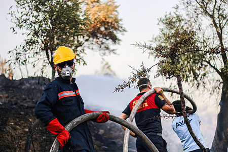 Firefighters working to extinguish burning trees.Wildfire that started 8 days ago continues in the southern and southwestern cities of Turkey.Mugla's Milas district is among the regions most affected by the fires.