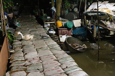 A pet goose seen on sandbag walls at Old Chao Por Lak Muang Shrine during monsoon season.Residents in Bang Sri Muang, Nonthaburi face daily flash floods during the monsoon season. This year the water level is higher than usual following the Dian Mu Storm, tidal bore, heavy rainfall which have caused more damage than usual.