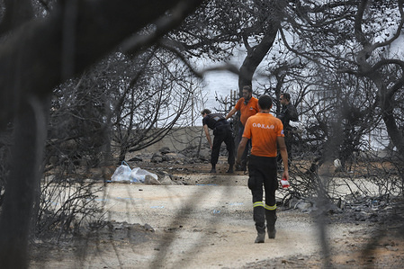 A man seen walking through the burnt trees on the land where 27 people died during the intense wildfires on 23 of July 2018 in Mati area in Attica, Greece. The Greek government announced that the area was illegally occupied and is characterized as a forest.